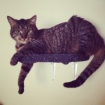 Mounted Carpeted Cat Shelves – Cute Cat Accessories