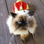 Cat Crown: To Satisfy Your Pet's Entitlement