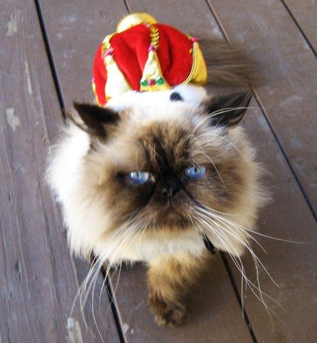 cat-crown