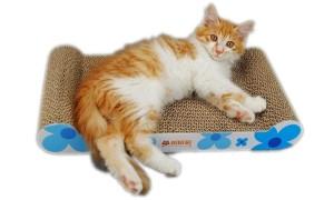 cat-scratching-cardboard