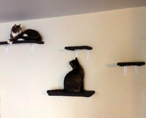 cat-shelves