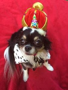 dog-wearing-crown