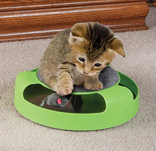 feline-frenzy