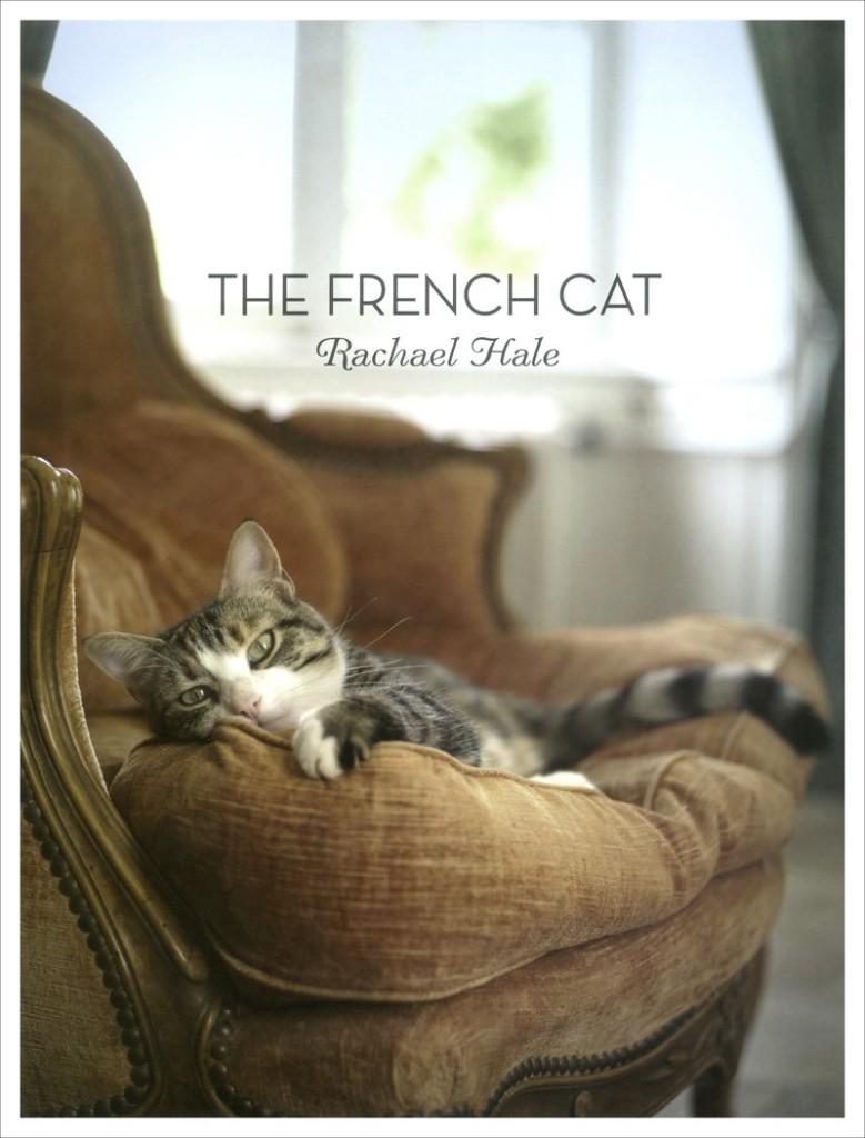 professional-cat-photos