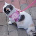 Pink Angel Wing Harness for Cats and Small Dogs