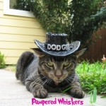 Cat Cowboy Hat: For the Adventurous Cat (or Dog)