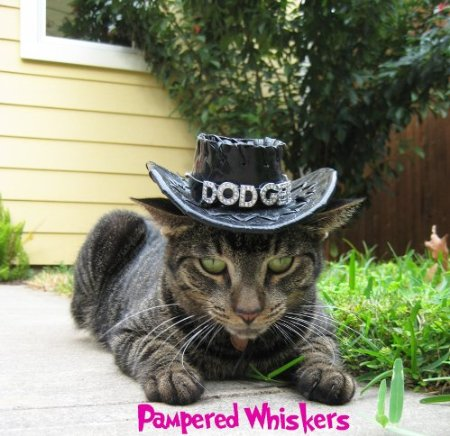 cat-cowboy-hat