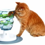 Cat Food Maze: Challenge Your Cat's Cognitive Skills