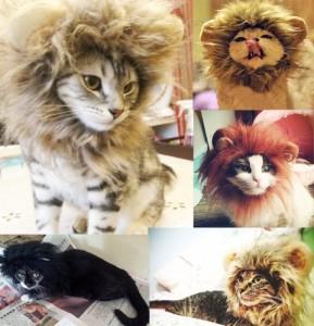 cat-lion-costume