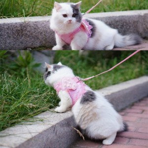 cat-pink-leash