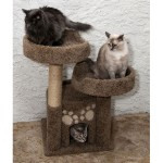 Sturdy Solid Wood Cat Tree for Multiple Cats