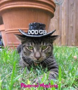 cat-wearing-cowboy-hat