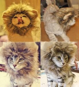 cats-wearing-lion-mane