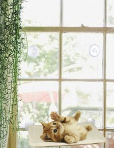 cute-cat-on-window-mount