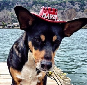 dog-cowboy-hat