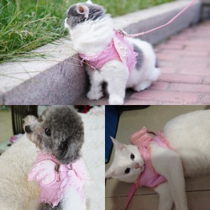 leash-for-cats-and-dogs