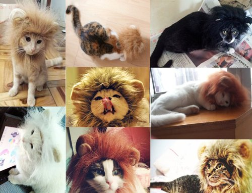 lion-hat-for-cats