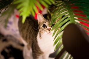 cat-654505