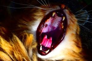 cat-724551