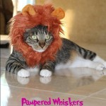 Cat Lion Hat Made with Red Satin