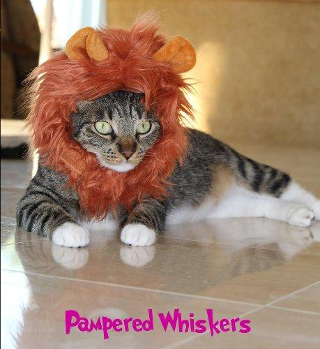 cat-lion-hat