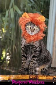 cat-standing-lion-hat