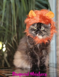 cat-with-lion-mane-costume