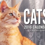 2016 Cat Calendar: Mini Day-to-Day Booklet