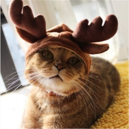 antlers for cats