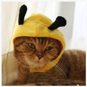 cat-bee-costume