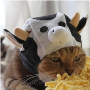 cat-cow-costume