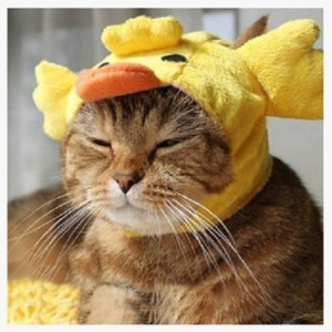 cat-duck-costume