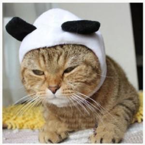 cat-panda-costume