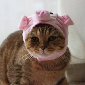 cat-pig-costume