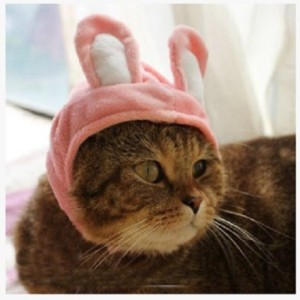 cat-rabbit-costume