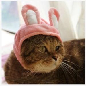 cat-rabbit-costume