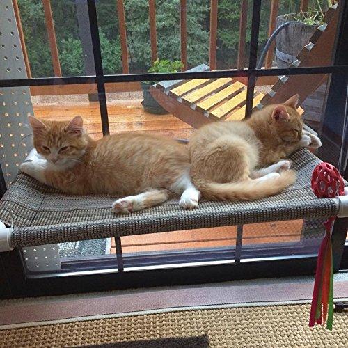 cat window perch aka kitty cot world 39 s best. Black Bedroom Furniture Sets. Home Design Ideas