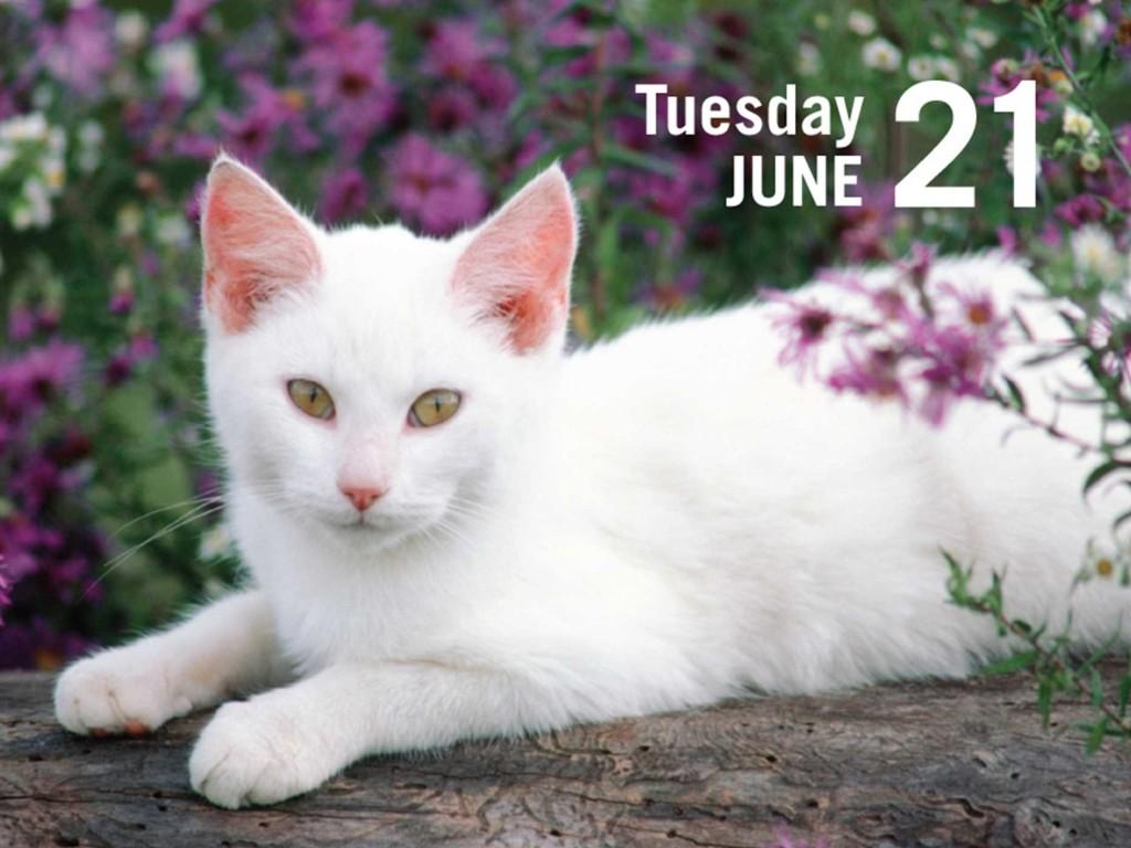 white-cat-in-calendar-photo