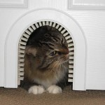 Cat Door: Don't let your cat get trapped in your bedroom!