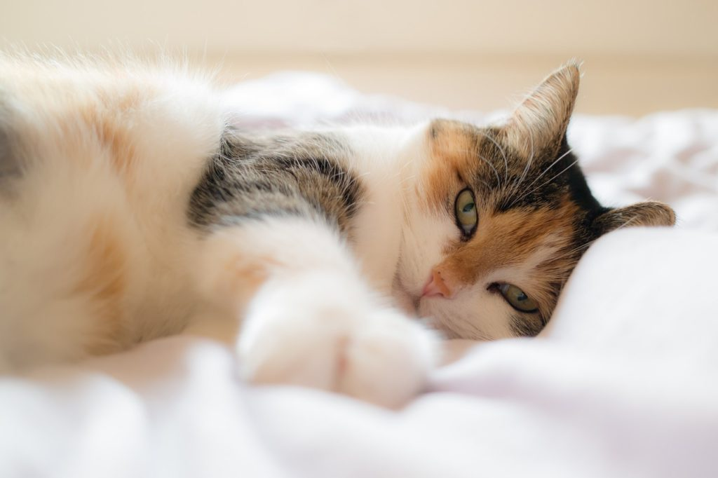 cat-1058095_1280